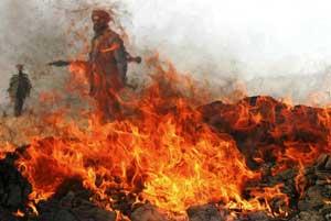 Soldati dell'esercito afghano distruggono una partita d'oppio a Kabul