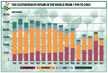 AFGHANISTAN AND THE REAL PROBLEM. The graphs provided by UNODC show the destruction of opium cultivation and production in Afghanistan in 2001. After the US intervention they returned immediately to record levels. One notes how, through collaborative projects with the UN, other Asian countries, Laos for example, are coming off the list of illegal opium producers