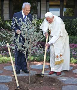Benedict XVI with the Israeli President Shimon Peres, plants an olive tree in the garden of the presidential residence in Jerusalem, 11 May 2009 [© Osservatore Romano]